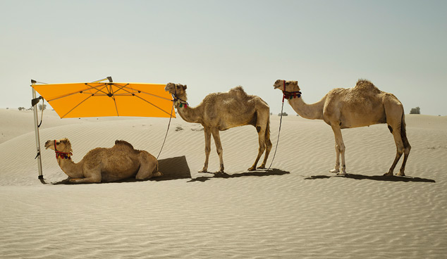 Sombrano with Camels